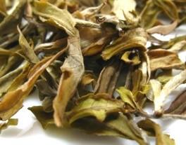 Darjeeling White Tea