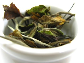 azorean white tea